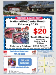 Dunedin Animal Medical Center Teeth Cleaning Coupon